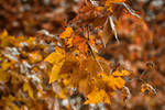 080 - Autumn by CarlaSophia