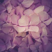 111 - Soft details by CarlaSophia