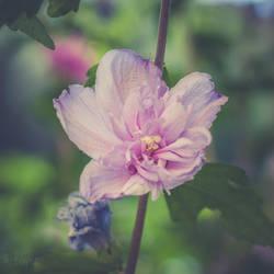 137 - Flower by CarlaSophia