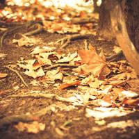 138 - Almost Autumn by CarlaSophia