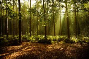 Changing Seasons II by RobinRoels