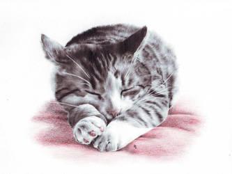 Lucky - sleep my friend by CKArtpage