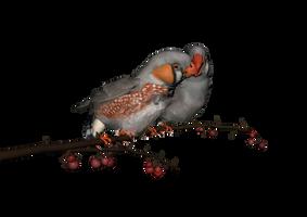 PNG Bird by ThoArtIsPixel