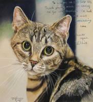 Tabby Cat by xxx-ellie