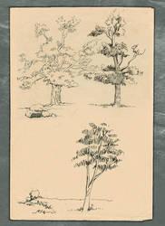 Tree Sketch 1 by vidyadhar