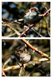 Birdies by neeta