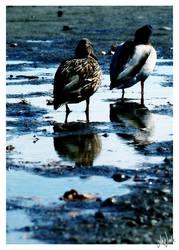 Reflections II by neeta
