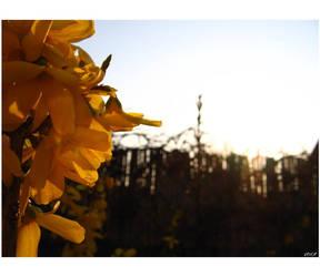 Golden Spring by verca