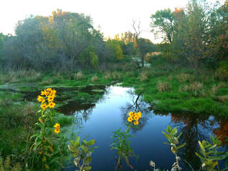 A Swampy Area At Fall's Sunset by LiLmEgZ97