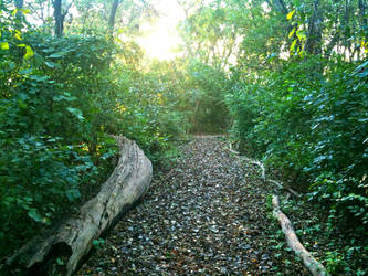 A Wood Trail's Entrance by LiLmEgZ97
