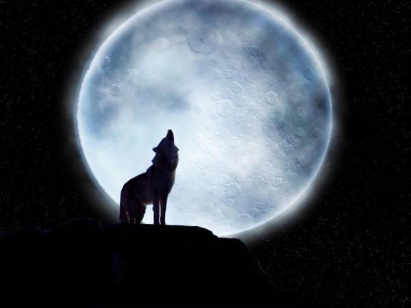 wolf by Yorvig