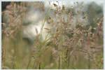 grasses by enaruna