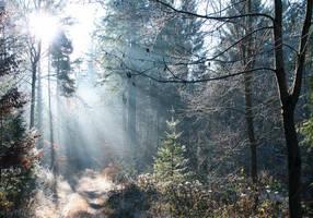Wintermorning by enaruna