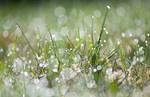 Dewdrops by enaruna
