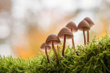 Mushrooms in the Moss by enaruna