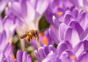 Busy Bee by enaruna