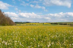 Yellow Meadow by enaruna