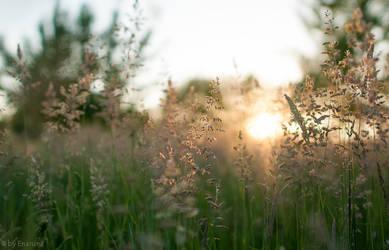 Summer Sunset by enaruna