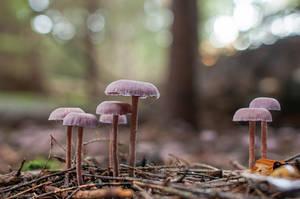 Mushrooms deep in the Wood by enaruna