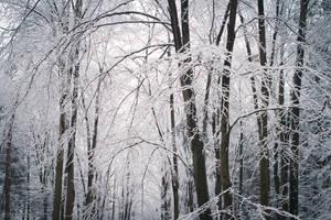 Winter by enaruna