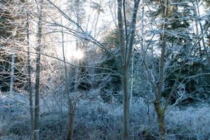 Frosty Morning by enaruna