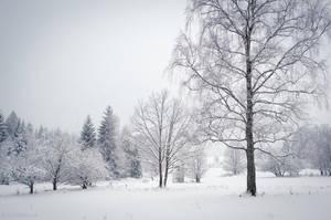 Winter Landscape by enaruna