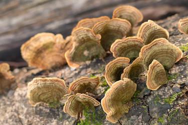 Tree Fungi by enaruna