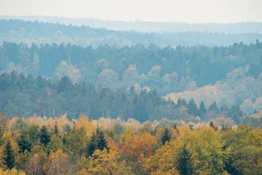Autumnal Forest by enaruna