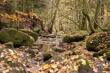 Autumn in the Black Forest by enaruna