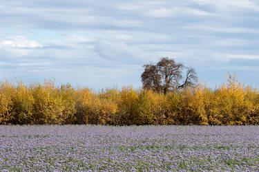 Flowering Field in the Autumn by enaruna