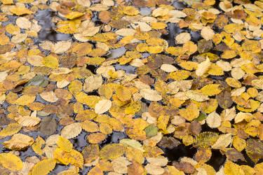 Leaves Carpet by enaruna