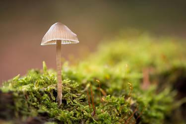 Little Mushroom in the Moss by enaruna