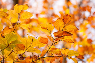 Autumn Leaves by enaruna