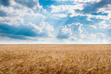 Field in the Summer by enaruna
