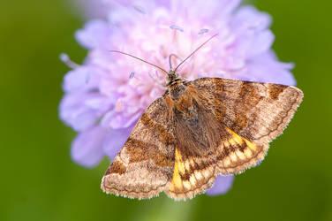 Butterfly by enaruna