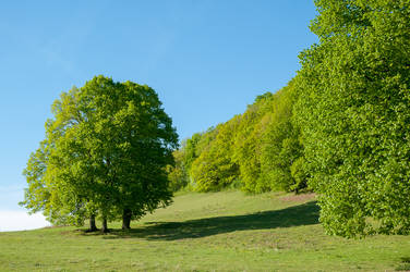Lime Trees on the Swabian Alb by enaruna