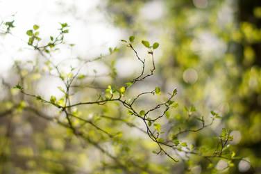 Fresh Spring Green by enaruna