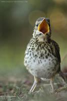 quackquack by unbelievablex