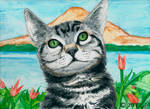 Kitty cat by ricky4