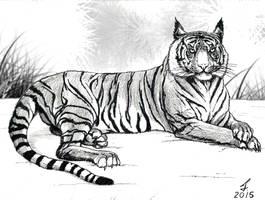 Tiger by ricky4