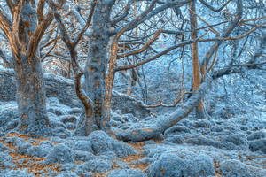 Sapphire Forest by somadjinn