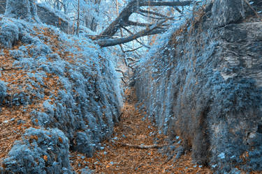 Ancient Sapphire Forest Trail by somadjinn