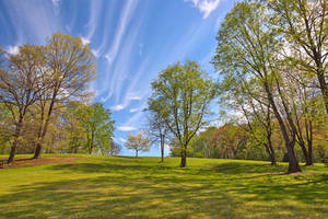 Meadowlark Sky Gardens by somadjinn