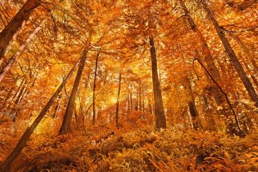 Glowing Bokeh Forest by somadjinn