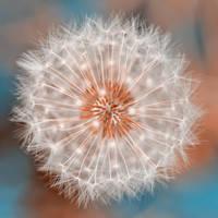 Dandelion Plasma by somadjinn