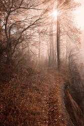 Misty Sun Kissed Trail by somadjinn