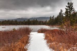 Winter Lily Pond by somadjinn