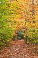 Rocky Autumn Forest Trail by somadjinn