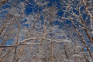 Susquehanna Winter Foliage by somadjinn