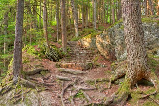 Green Mountain Forest Trail by somadjinn